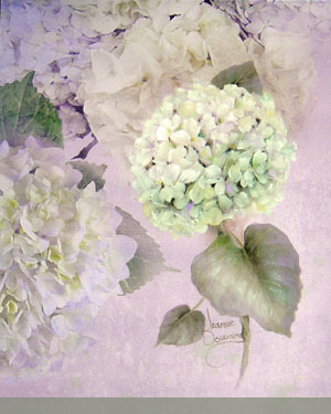 Hydrangea Papers by Jeanne Downing