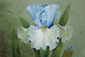 Adoregon Iris Packet by Jeanne Downing